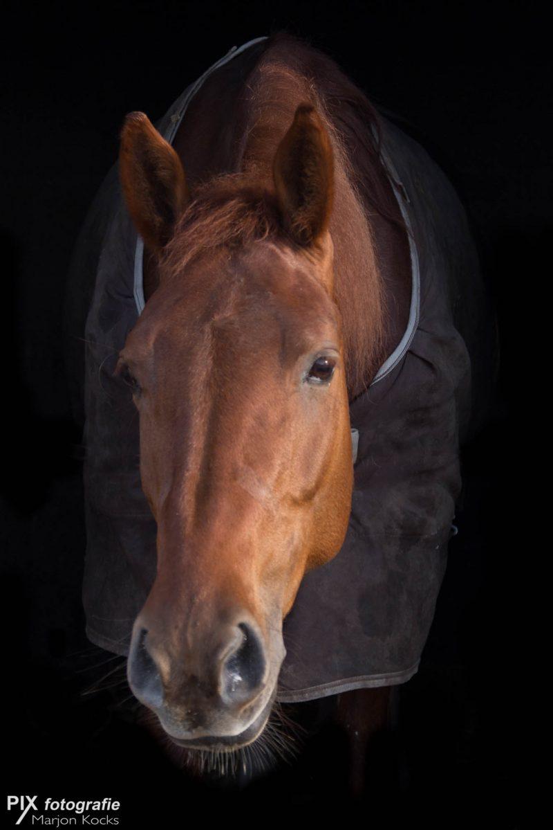 20170202-paard-046-13-bewerkt