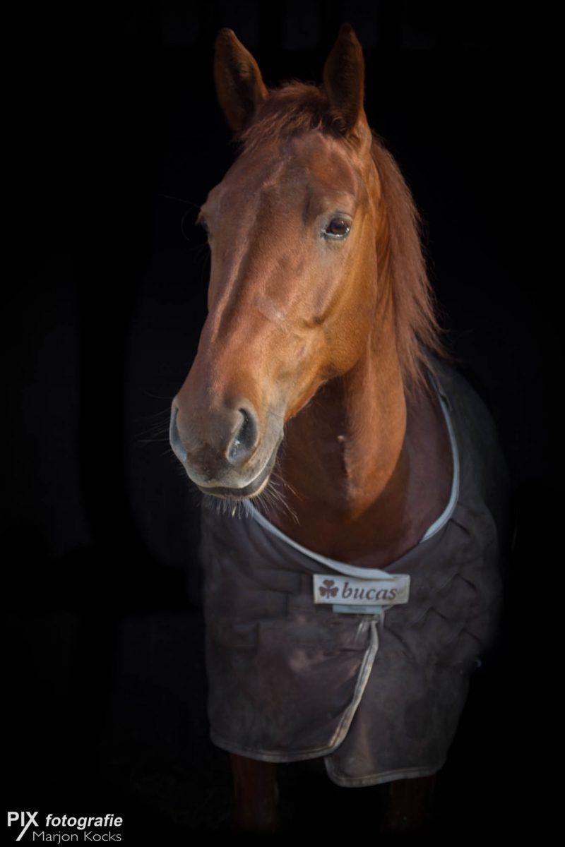 20170202-paard-046-16-bewerkt