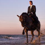 Paardenshoot-Calijn-met-Santi-PIX-fotografie