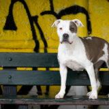 honden-foto-pix-fotografie-01