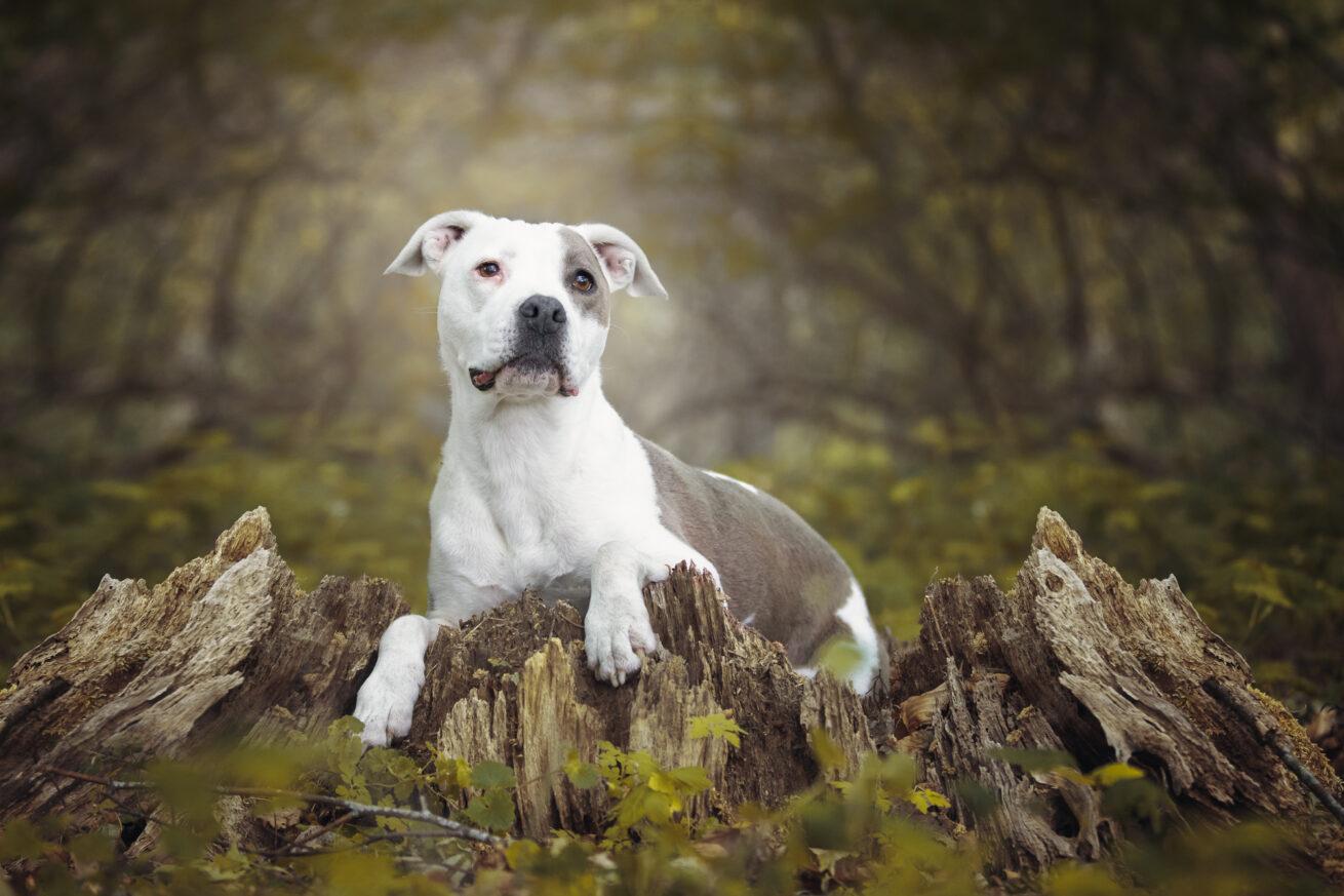 honden-foto-pix-fotografie-zeeland-03
