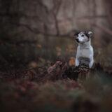 honden-foto-pix-fotografie-zeeland-7