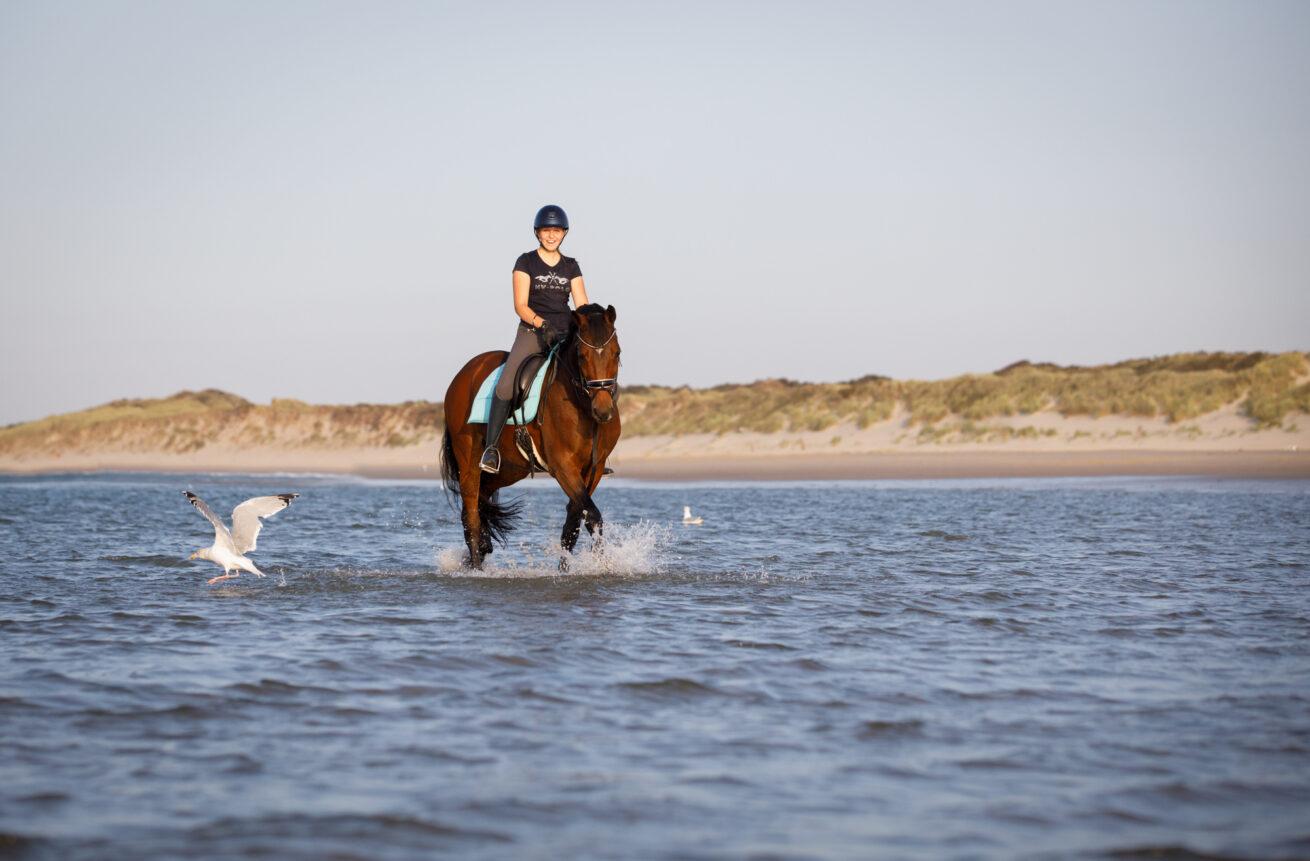 paarden-foto-pix-fotografie-zeeland-29
