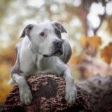 honden-foto-pix-fotografie-zeeland-02