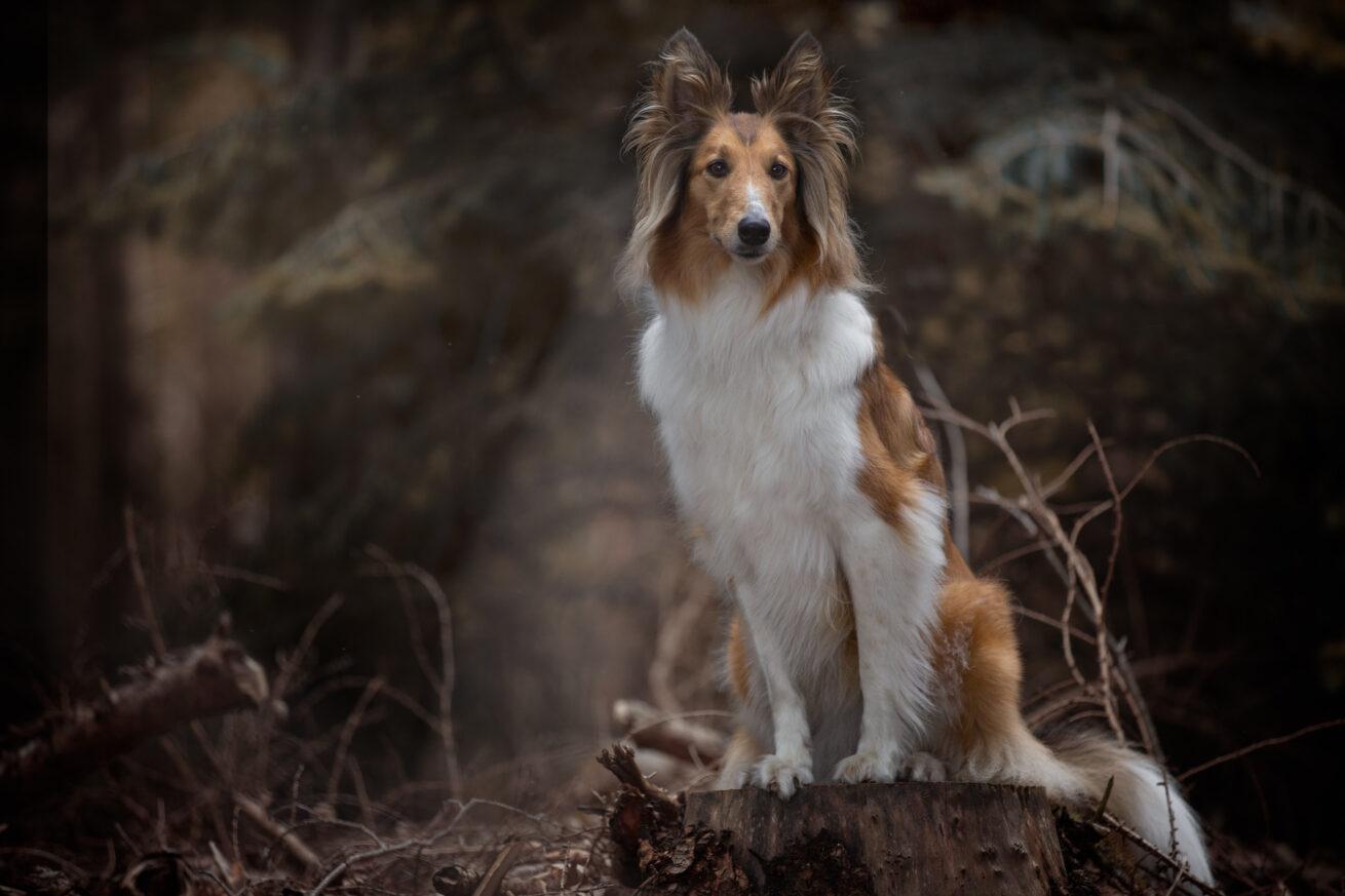 honden-foto-pix-fotografie-zeeland-04