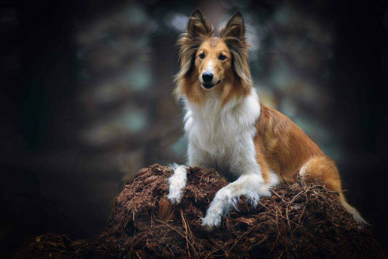 honden-foto-pix-fotografie-zeeland-05