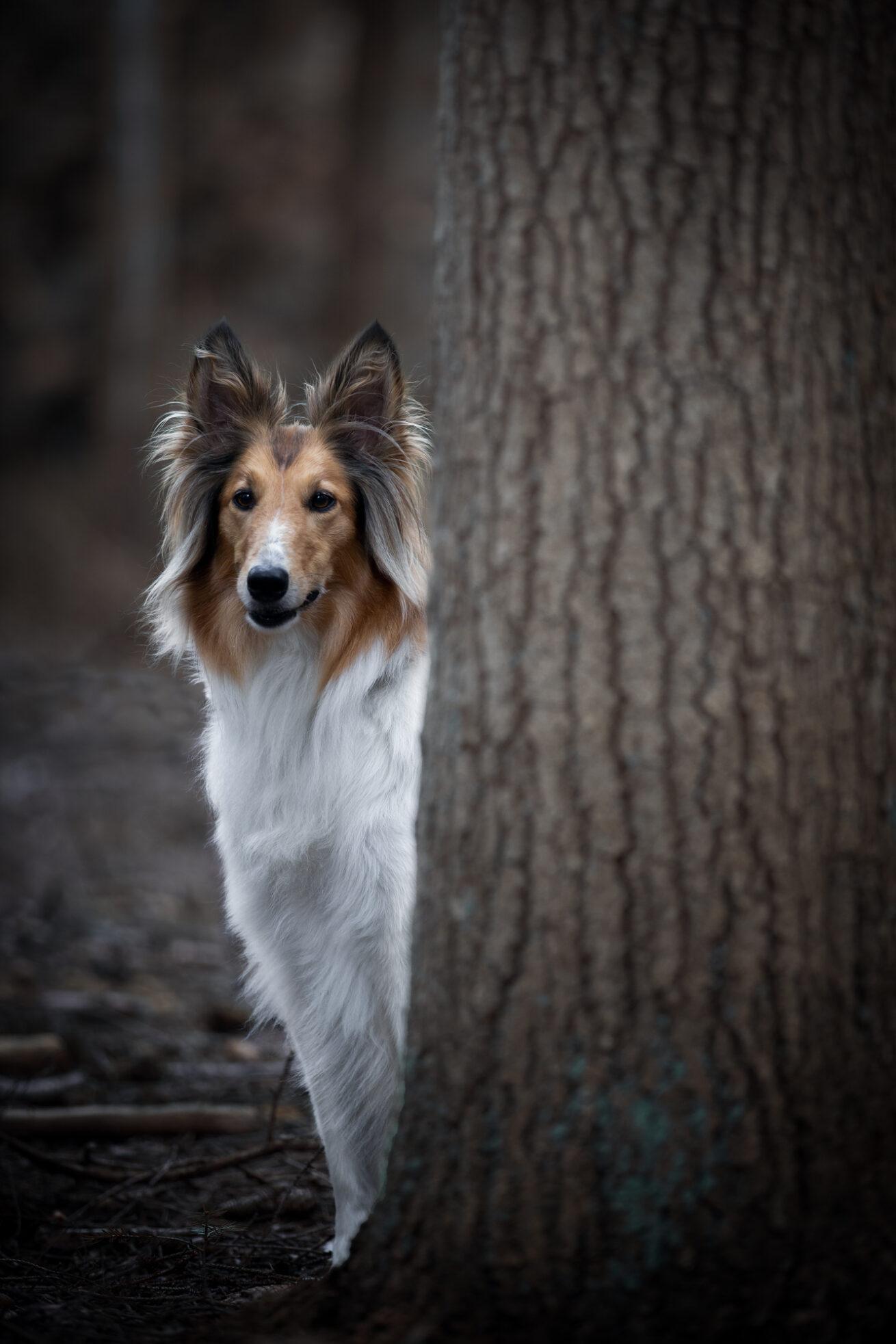 honden-foto-pix-fotografie-zeeland-06
