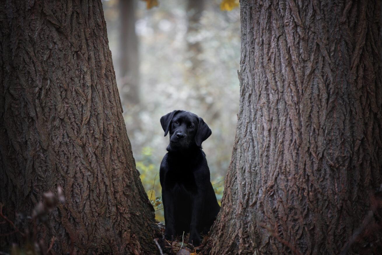 honden-foto-pix-fotografie-zeeland-10