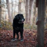 honden-foto-pix-fotografie-zeeland-12
