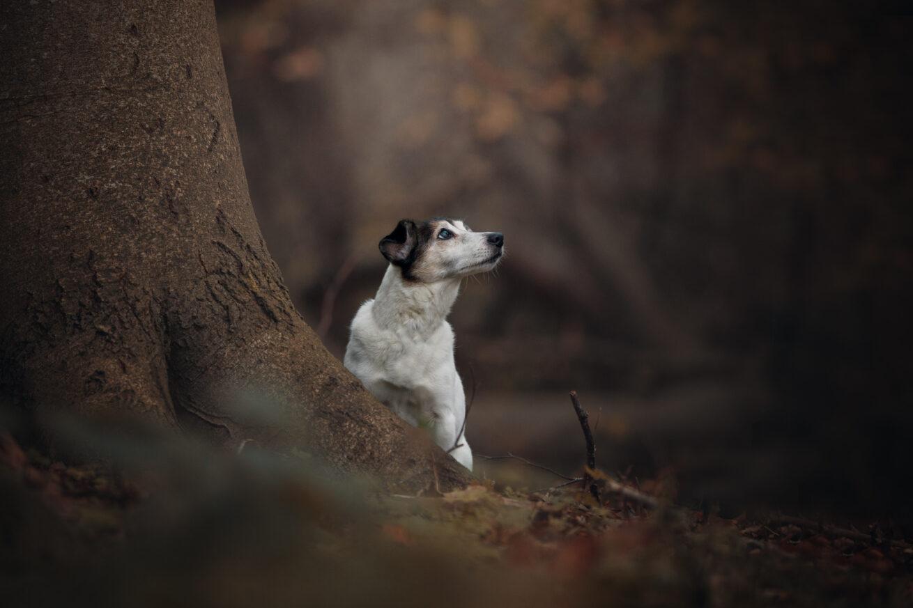 honden-foto-pix-fotografie-zeeland-8